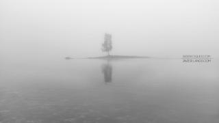 Fotografía minimalista en blanco y negro de un árbol en la niebla.