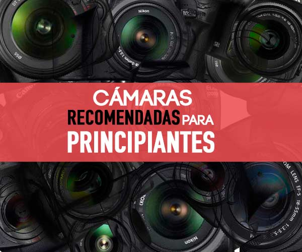 Las Cámaras Réflex Más Recomendadas para 2020 – ¿Qué cámara comprar?