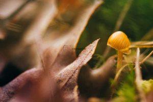 fotografia en otoño