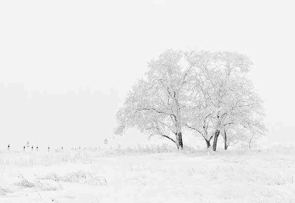 por que foto de nieve gris