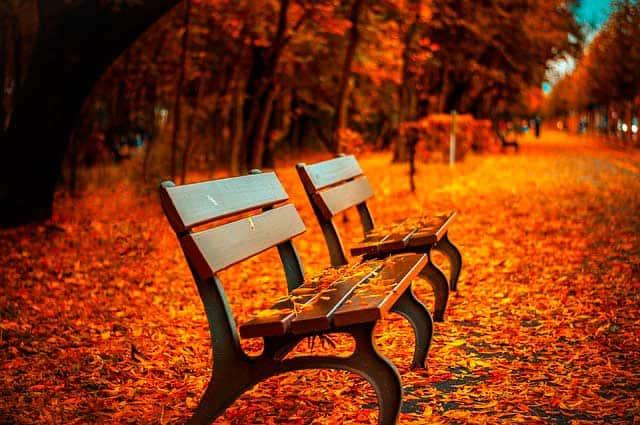 consejos para sacar fotos en otoño