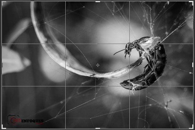 puntos de interes en una fotografia digital