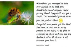 web que critica tus fotos