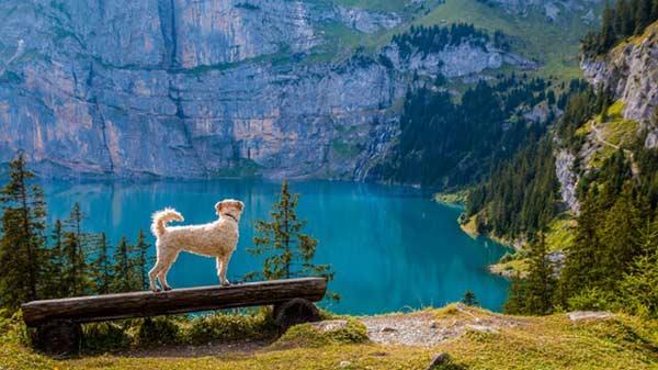 fotografiar a perros