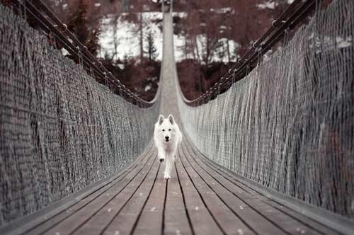 fotografia de animales