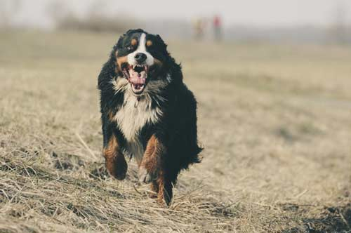 sesión de fotos con perros