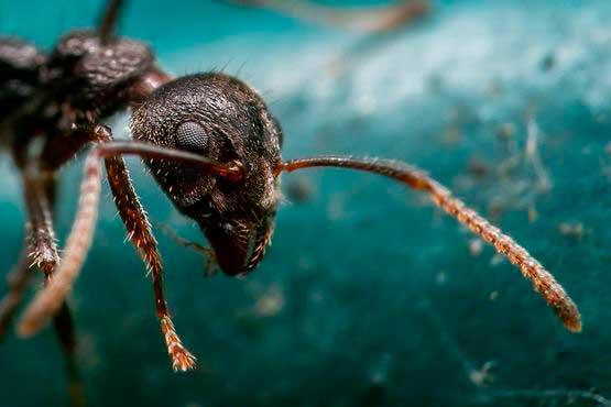 fotografiar insectos