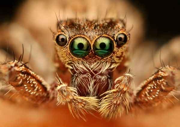 fotografía macro de una araña
